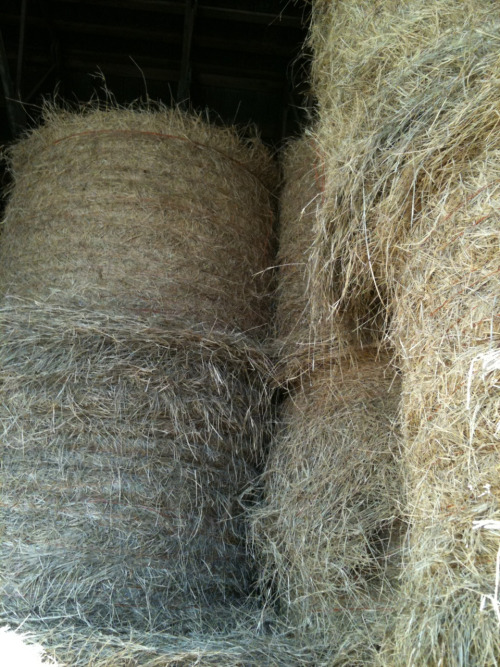coastal hay