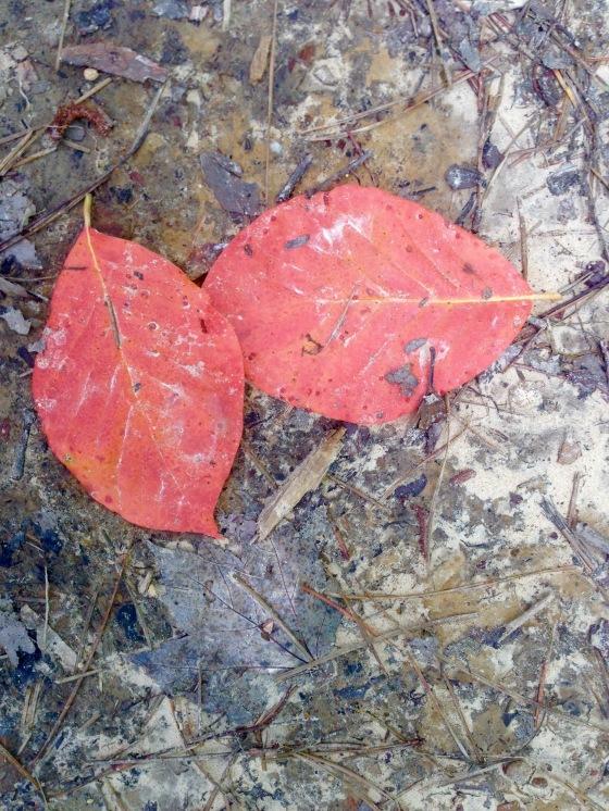 kentucky leaves