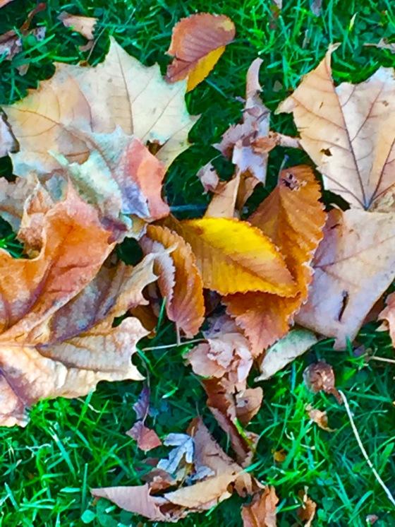 autumn-falling